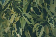 Textura e fundo verdes da folha Feche acima da vista da folha verde O verde deixa o teste padrão Fotos de Stock Royalty Free