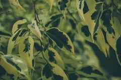 Textura e fundo verdes da folha Feche acima da vista da folha verde O verde deixa o teste padrão Imagens de Stock