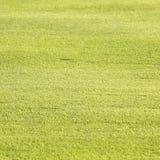 Textura e fundos da grama verde Foto de Stock