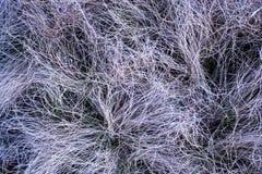 Textura el año pasado secados de los modelos de la hierba del ` s Imágenes de archivo libres de regalías