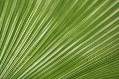 Textura em folha de palmeira Fotografia de Stock Royalty Free