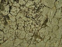 textura en el modelo natural, piso de piedra Decorativo, gris foto de archivo