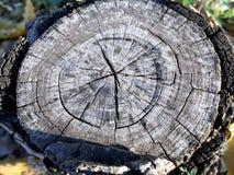 Textura envejecida de la base del árbol Foto de archivo
