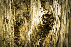 Textura envejecida del nudo Foto de archivo