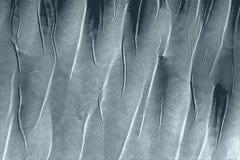 Textura erizada de las plumas alineadas para un fondo imagenes de archivo