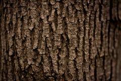 Textura escura da casca de árvore Foto de Stock Royalty Free