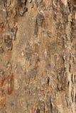 Textura española de la corteza de árbol de caoba fotos de archivo libres de regalías