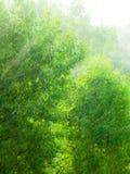 Textura exterior lluviosa del fondo del verde de la ventana Foto de archivo