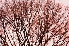 Textura fantástica das árvores Foto de Stock Royalty Free