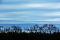 Textura fantástica das árvores Fotografia de Stock Royalty Free