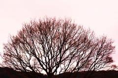 Textura fantástica das árvores Foto de Stock
