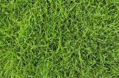 Textura fresca de la hierba imagenes de archivo