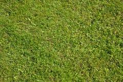 Textura fresca de la hierba verde Imagen de archivo libre de regalías
