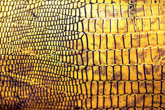 Textura/fundo da pele do réptil Fotos de Stock