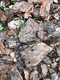 Textura/fundo de partes marrons de casca de árvore naughty fotografia de stock