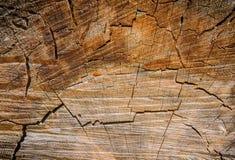 Textura geométrica de uma árvore do corte Fotografia de Stock