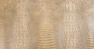 Textura grabada en relieve coloreada hueso del cuero trasero del cocodrilo Fotos de archivo libres de regalías