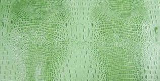 Textura grabada en relieve verde clara del cuero del cocodrilo Fotos de archivo
