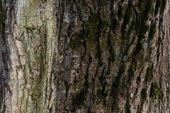 Textura gravada da casca de uma árvore Papel de parede de madeira velho do teste padrão da textura da árvore Fundo do conceito fotografia de stock