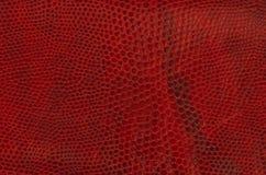 Textura gravada vermelho da pele do réptil Fotografia de Stock Royalty Free