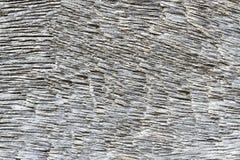 Textura gris de madera para el fondo Imagen de archivo libre de regalías