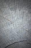 Textura gris natural de Vignetted del corte del tocón de árbol Imagen de archivo libre de regalías