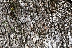 Textura grosseira da madeira fotografia de stock royalty free