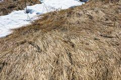 Textura hermosa de la hierba del ` s del año pasado Fotos de archivo