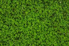 Textura hermosa de la hierba verde foto de archivo