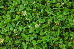Textura hermosa de la hierba verde fotos de archivo libres de regalías