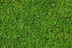 Textura hermosa de la hierba verde fotografía de archivo libre de regalías