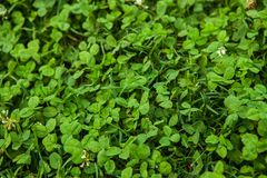 Textura hermosa de la hierba verde fotos de archivo