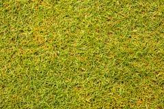 Textura hermosa de la hierba verde del campo de golf Foto de archivo libre de regalías