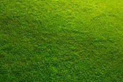 Textura hermosa de la hierba verde del campo de golf Fotografía de archivo libre de regalías