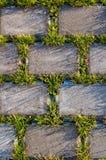 Textura hermosa de la hierba y del beton Imagen de archivo libre de regalías