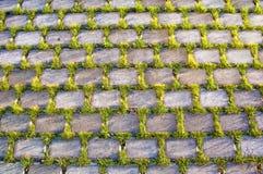 Textura hermosa de la hierba y del beton Fotografía de archivo
