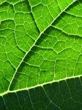 Textura hermosa de la hoja Fotografía de archivo libre de regalías