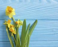 Textura hermosa de la primavera de la invitación de los narcisos elegante en un fondo de madera azul de la boda romántico Fotografía de archivo