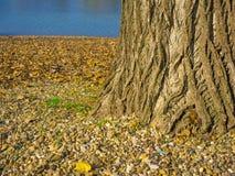 Textura hermosa del árbol al lado de un lago Fotografía de archivo
