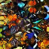 Textura hermosa del fondo hecha de muchas mariposas Fotografía de archivo