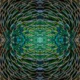 Textura hermosa del fondo del modelo hecha del ` s f del Peafowl verde Imágenes de archivo libres de regalías