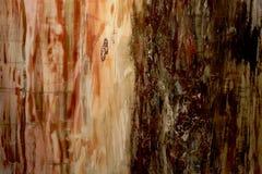 Textura hermosa del fondo natural de la madera aterrorizada agradable agradable de madera aterrorizada en colores rojos y amarill fotos de archivo