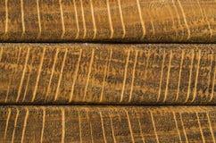 Textura horizontal del grano del extremo del roble de la raya Foto de archivo libre de regalías