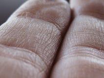 Textura humana do dedo Imagem de Stock