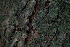 Textura inclinada de la corteza Fotos de archivo