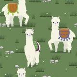 Textura inconsútil con las alpacas lindas que pastan en el prado Modelo del vector stock de ilustración