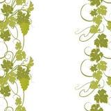 Textura inconsútil con las vides y los manojos de uvas Fotografía de archivo
