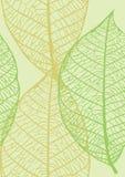 Textura inconsútil de hojas Fotos de archivo libres de regalías