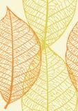 Textura inconsútil de hojas Foto de archivo libre de regalías