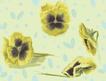 Textura inconsútil de las flores amarillas del dibujo pensamiento Fotografía de archivo
